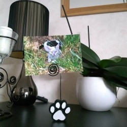 Porte-photos patte de chat, photo exemple, Tribu de chats