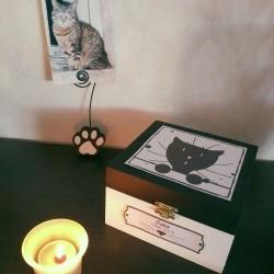 Exemple Urne funéraire pour chat en bois, motif tête de chat curieux, carrée, noir et blanc, Tribu de chats.