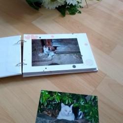 Album photos, mamie chat, blanc, photo exemple page, Tribu de chats.