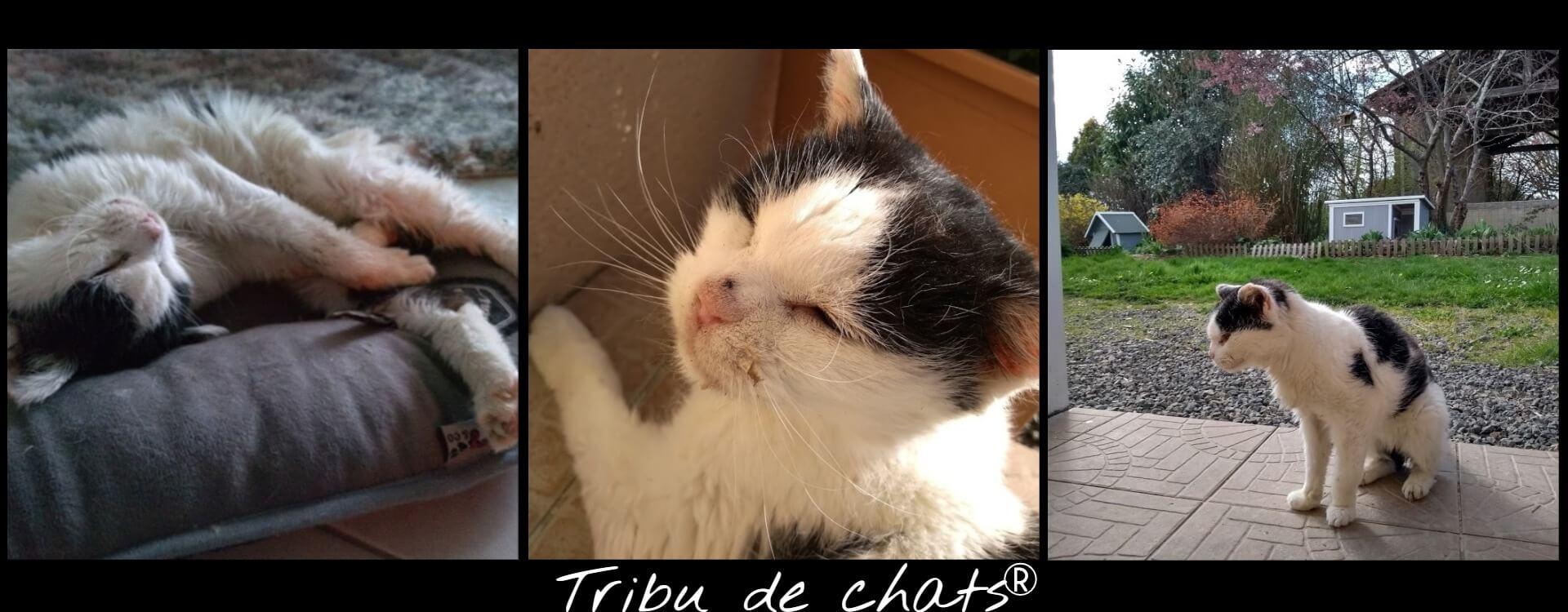 Joséphine,_vieux_chat_va_mieux_et_profite_de_la_vie