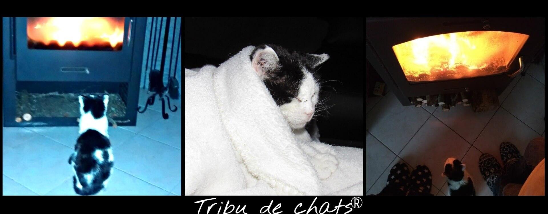 Joséphine_de_l_Tribu_de_chats_se_réchauffe_sous_un_plaid_ou_devant_le_feu