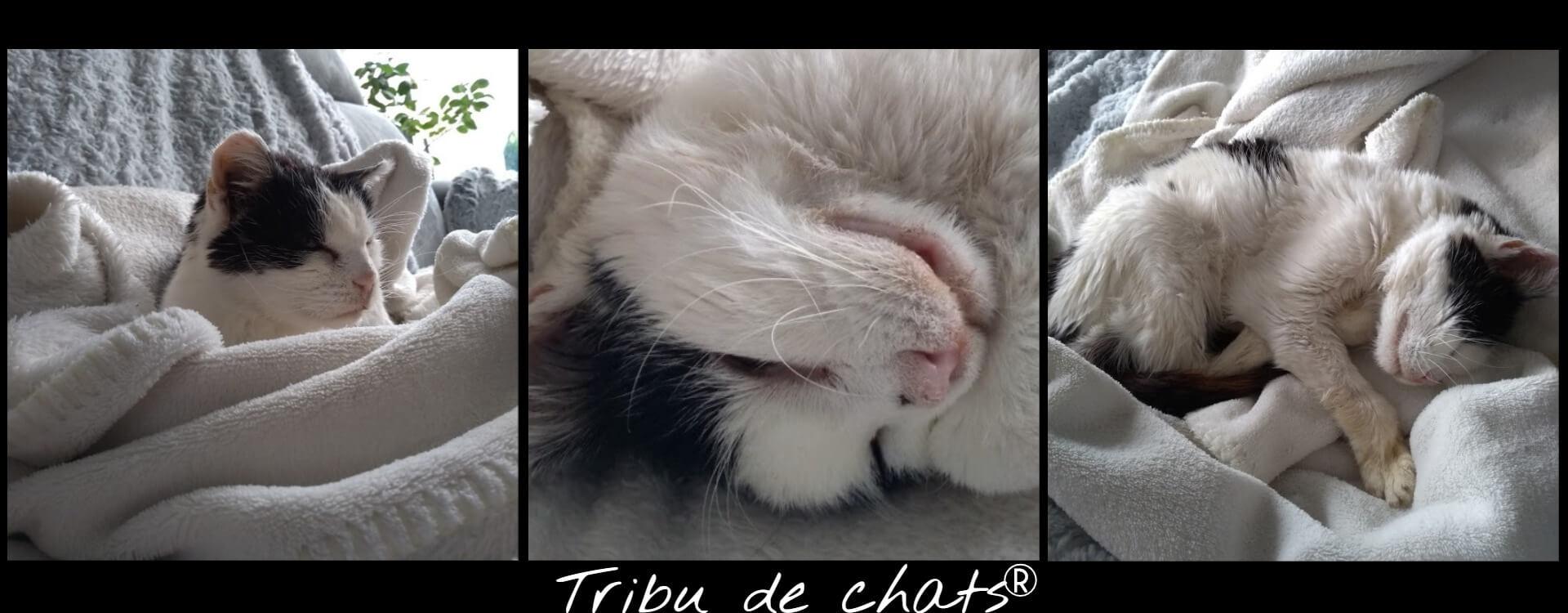 Joséphine_de_la_Tribu_de_chat_dans_le_canapé