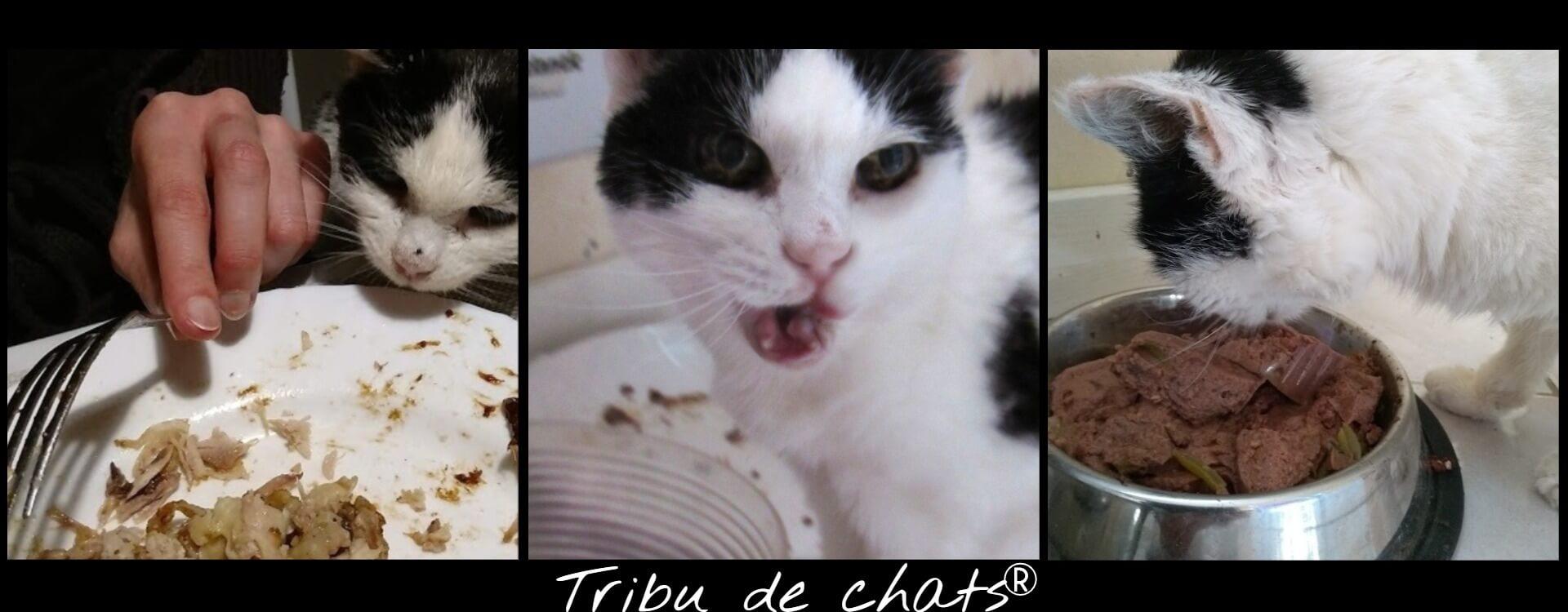 Joséphine_de_la_Tribu_de_chats_gourmande