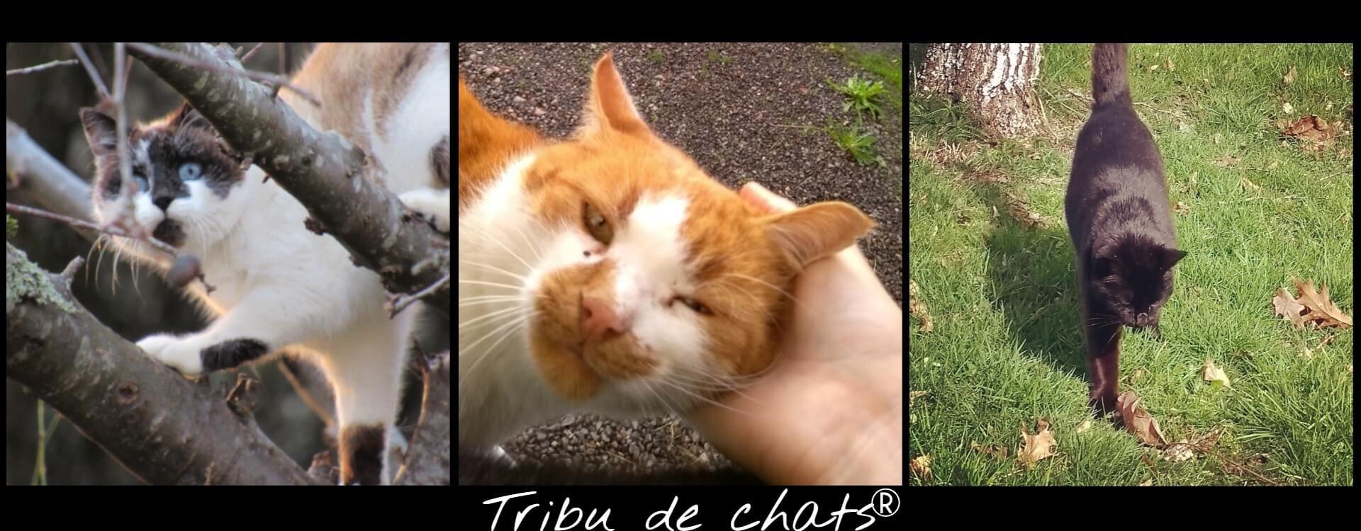 Les_bons_moments_de_la_Tribu_de_chats,_dans_les_arbres,_câlins,_balade_au_jardin