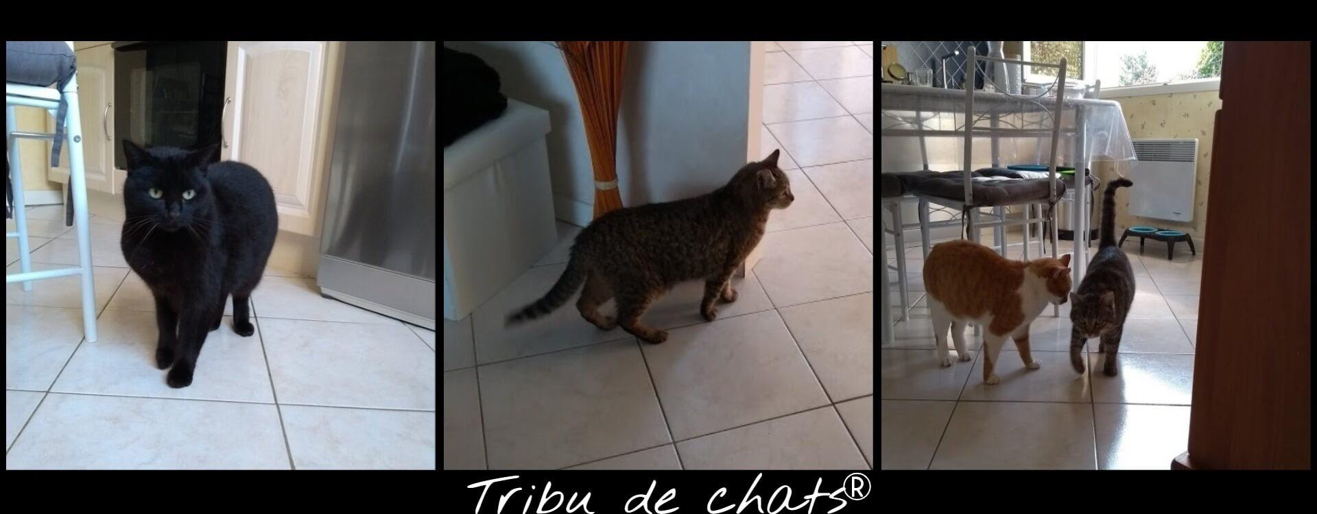 Les_chats_en_visite_de_la_maison