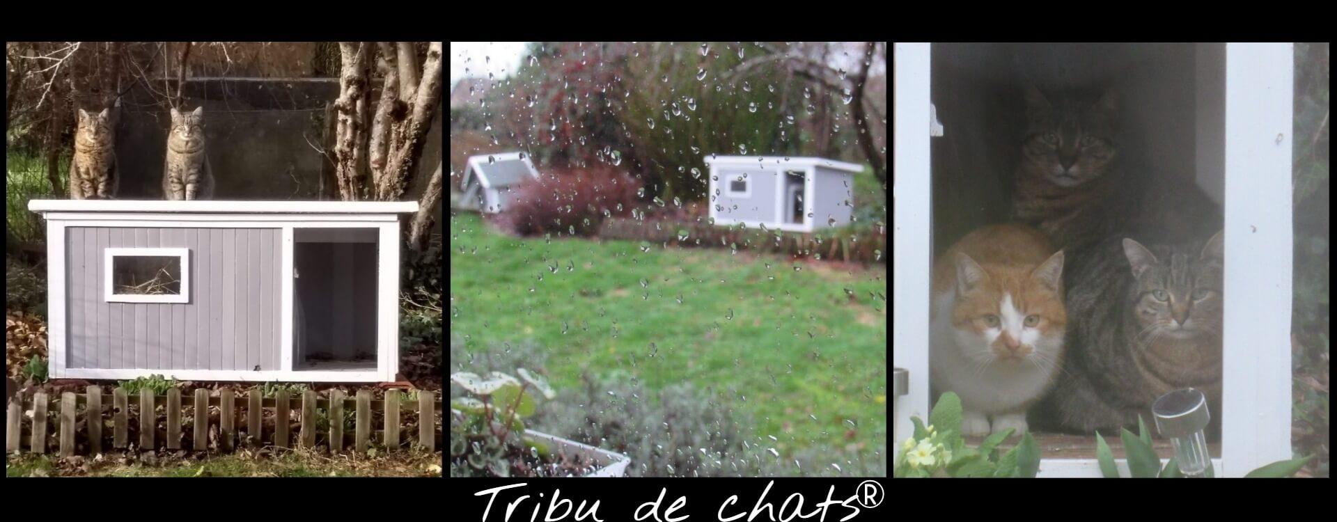 Les_chats_se_mettent_à_labri_dans_les_niches_par_mauvais_temps