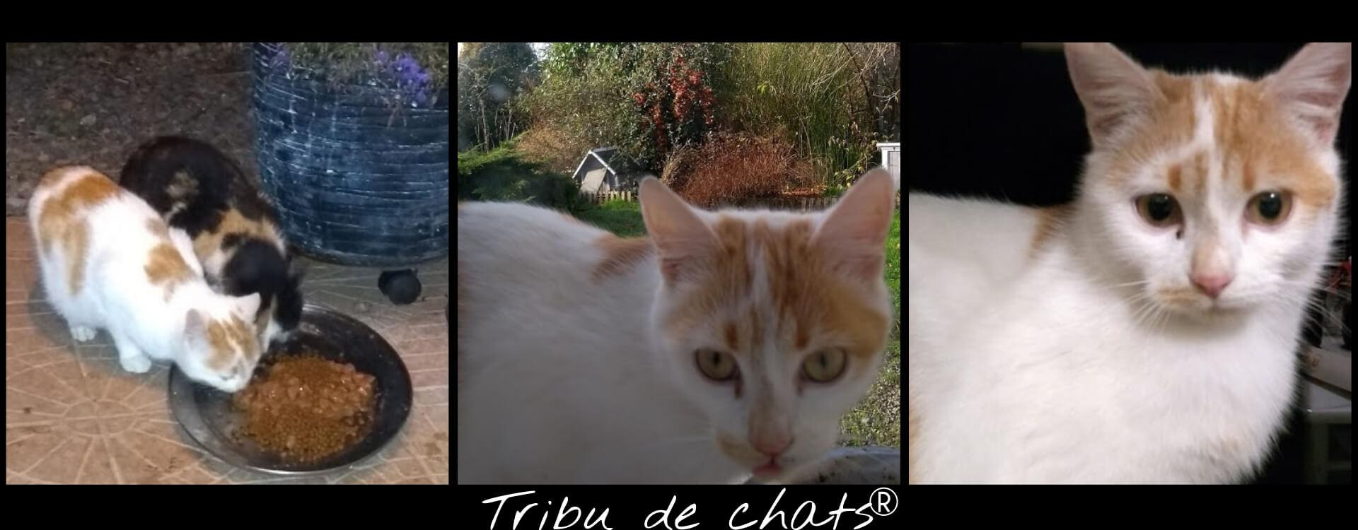 Les_nouveaux,_une_minette_et_son_chaton