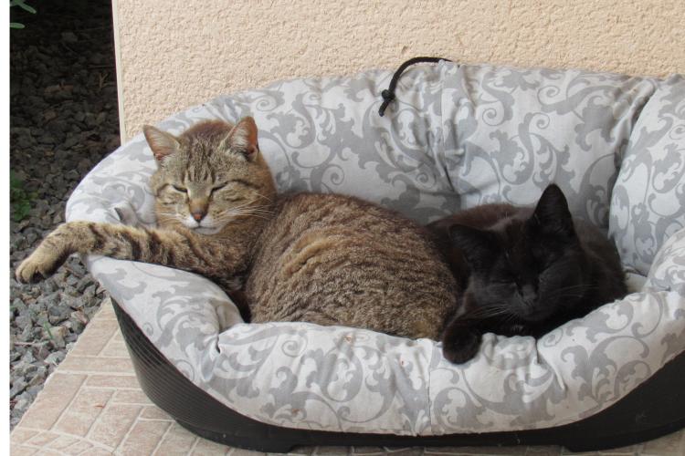 Maman/Maman de la Tribu de chats