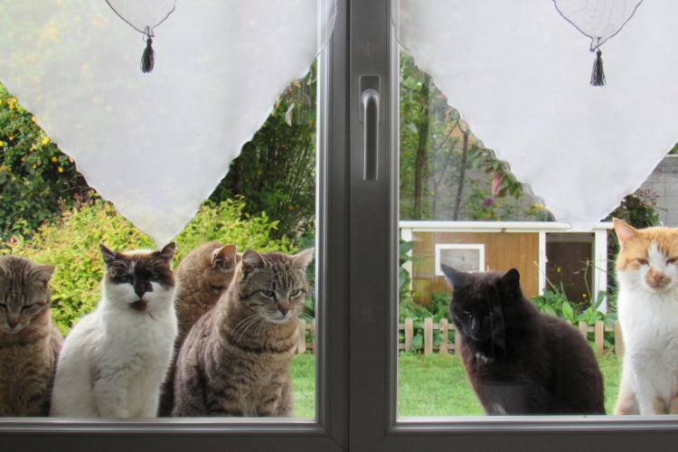 Maman/Maman de la Tribu de chats, a de l'autorité sur les autres membres surtout en attendant les croquettes