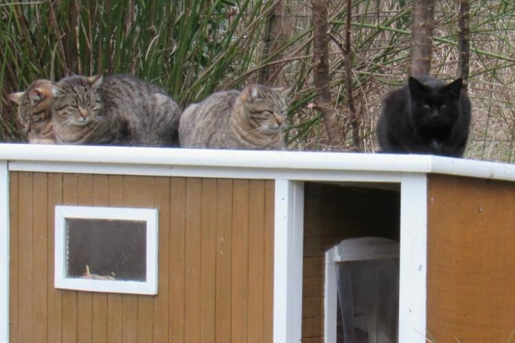 Maman/Maman de la Tribu de chats, aime prendre le soleil sur le toit de la niche