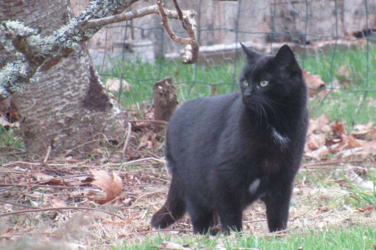 Maman/Maman de la Tribu de chats, apprécie son nouveau cadre de vie