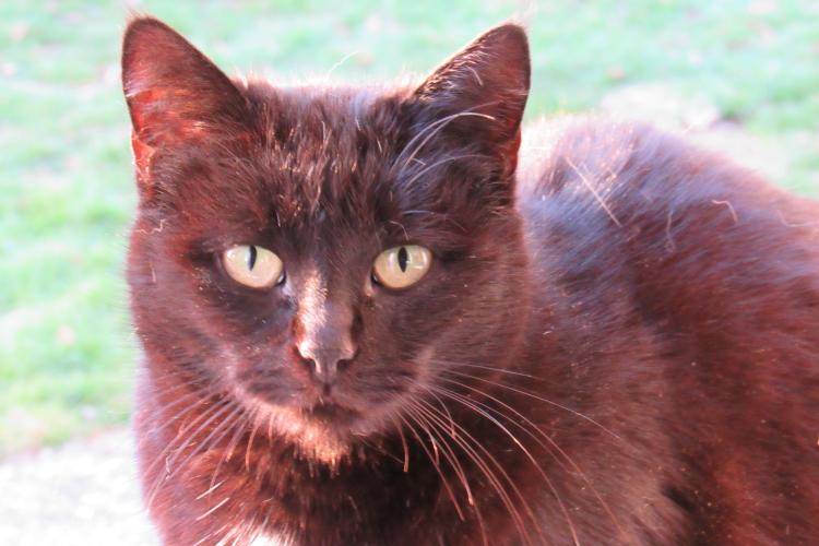 Maman/Maman de la Tribu de chats, reflets roux au soleil