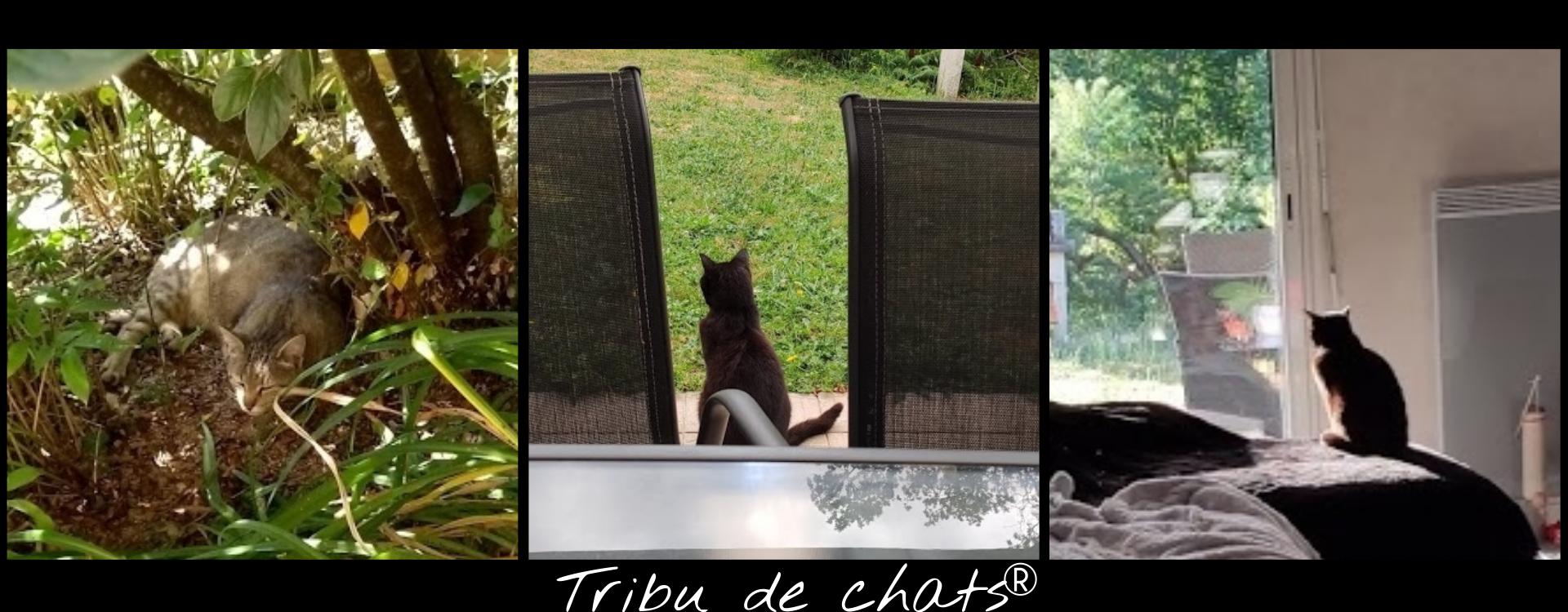 On profite de l'été chez la Tribu de chats