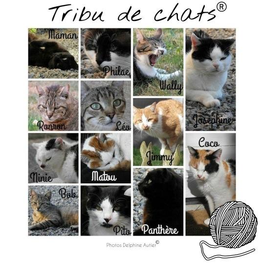 Les membres de la Tribu de chats