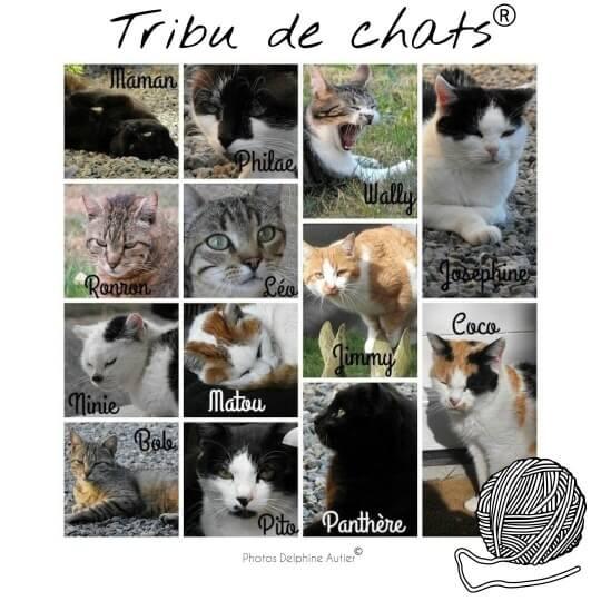 Présentation des membres de la Tribu de chats