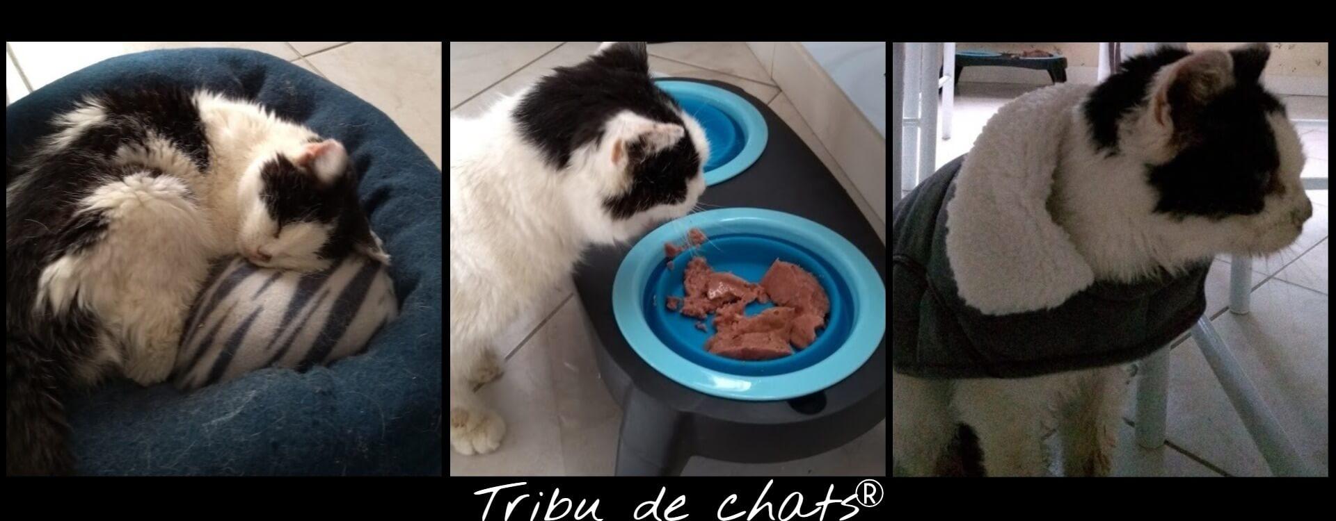Tout_pour_le_confort_de_Joséphine,_vieux_chat_de_la_Tribu
