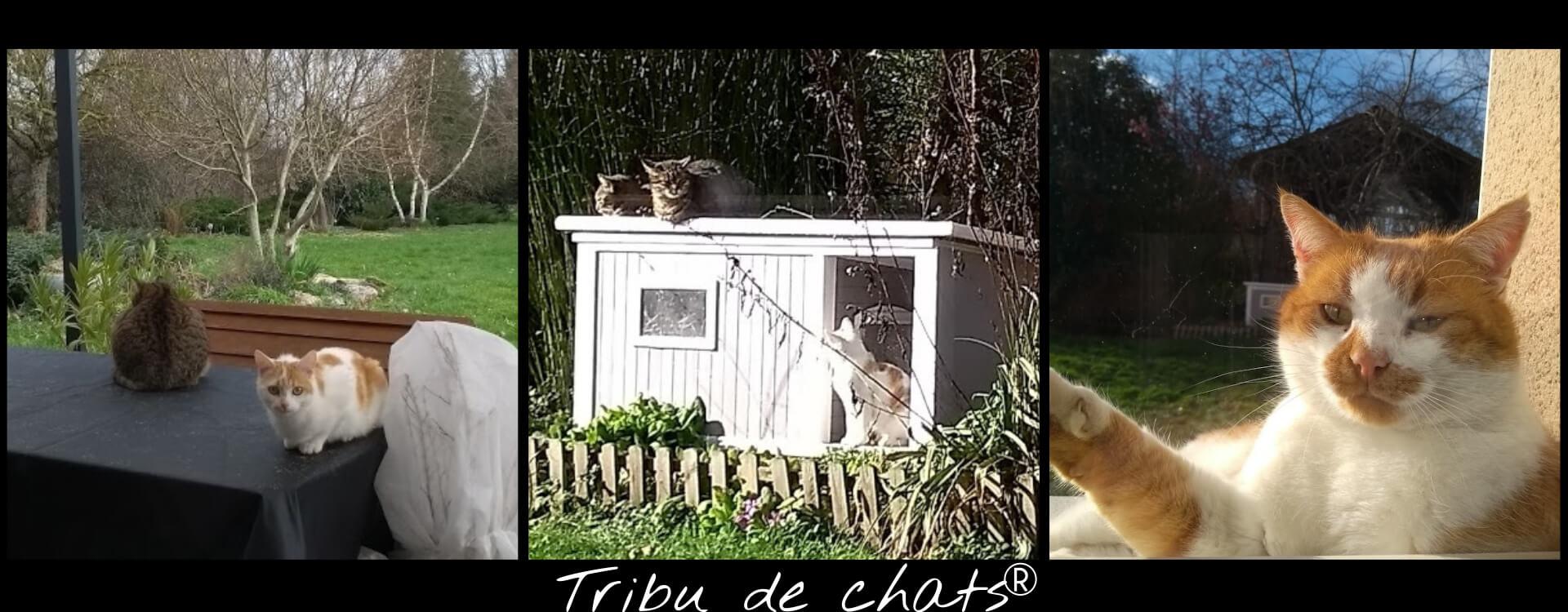 Cohabitation chez la Tribu de chats