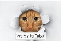 Un anniversaire chez la Tribu de chats